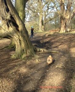 Me, Basil, at my favourite park