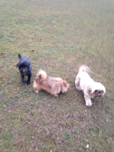 Hanging with my pack: Wilf, Coco and me Basil