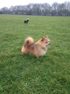 Me, Basil, foxcatcher