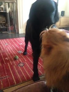 Me, Basil, on the sofa and Zeb