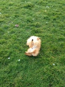 Me, Basil, rolling again