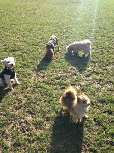 Me, Basil, and friends in the sunshine
