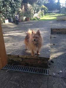 Me, Basil, at the back door