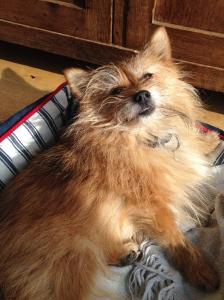 Me, Basil, sunbathing