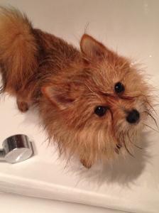 Basil in the bath