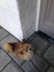 I really want a treat.